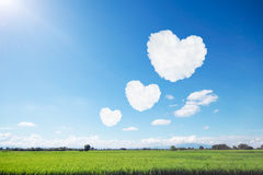 three heart shaped clouds on blue sky and sunshine above rice fi Royalty Free Stock Photo