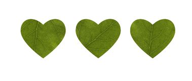 Three hearts carved from a leaf of a tree. Close-up. The concept of health, environmentally friendlyt. The element of decoration stock photos