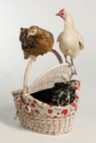 Three Hens with picnic basket Stock Photos