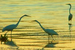 Three herons. In the lake royalty free stock photos