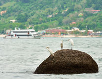 The three herons Stock Photo