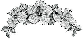 Three hibiscus flower bouquet stock illustration
