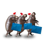 Three hippos going to supermarket. Royalty Free Stock Photography