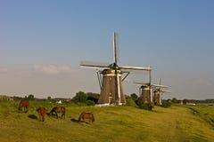 Three historic windmills. In a Dutch landscape Royalty Free Stock Photo