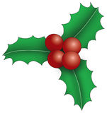 Three holly leaves with berries Stock Photos