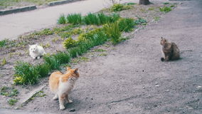 Three Homeless Cats on the Street in the Park. Slow Motion. In 96 fps. Three homeless gray, red and White cats sitting on the ground in the park stock video