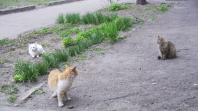 Three Homeless Cats on the Street in the Park. Slow Motion. In 96 fps. Three homeless gray, red and White cats sitting on the ground in the park stock footage