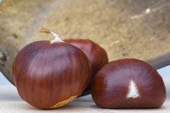 Three horse chestnuts royalty free stock photography