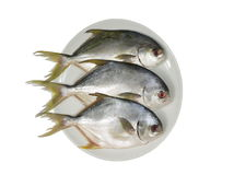 Three horse mackerel Royalty Free Stock Photos