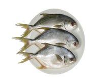 Three horse mackerel Royalty Free Stock Photos