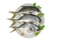 Three horse mackerel Royalty Free Stock Image