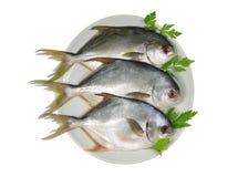 Three horse mackerel Royalty Free Stock Image