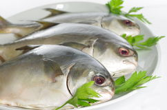 Three horse mackerel Stock Photos