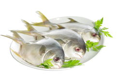 Three horse mackerel Stock Images