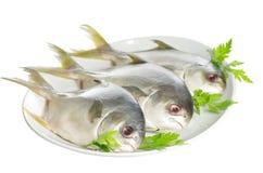 Three horse mackerel Stock Images