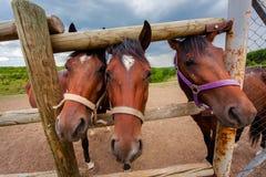 Three horse muzzle in the aviary Stock Photo