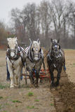 Three Horse Plow Team Royalty Free Stock Photo