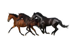 Three horse run gallop stock photography