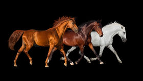Three horse run Royalty Free Stock Photography
