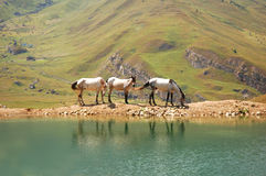 Three horses. At the lake Stock Photography