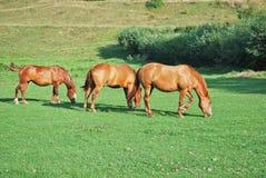 Three horses Stock Photos