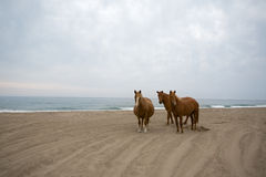 Three horses on the beach Stock Photos