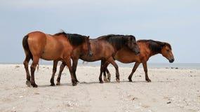 Three horses on a beach Royalty Free Stock Photography