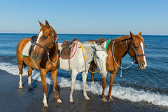 Three horses on the beach Royalty Free Stock Images