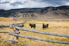 Three Horses behind the fence in Colorado stock image