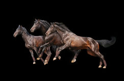 Three horses on black Stock Photos