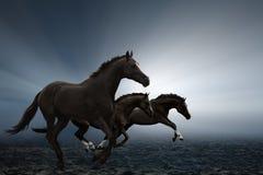 Three horses Stock Image