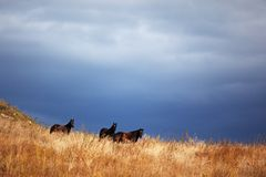 Three horses and clouds Royalty Free Stock Photo
