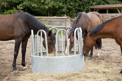 Three horses eat hay Stock Image