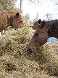 Three Horses Eating Royalty Free Stock Photography