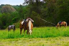 Three horses eating green grass near forest. On open air Royalty Free Stock Photography