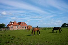 Three horses on a farm meadow Royalty Free Stock Images
