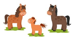 Three horses: father, mother and baby. On white background Stock Photography