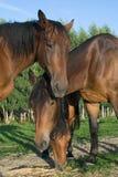 Three horses. Feeding in the farm Royalty Free Stock Image