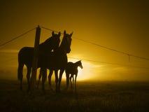 Three horses at fence_toned Royalty Free Stock Photography