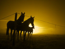 Three horses at fence in twilight_toned Stock Images