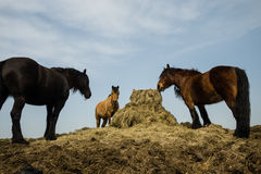 Three horses grazing Stock Images