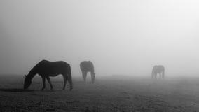 Three horses Royalty Free Stock Images