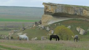 Three Horses Grazing Near Rock stock video footage