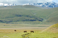 Three horses grazing near stream in mountains Stock Photo