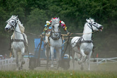 Three horses in harness. Horse race. Horse race. Three horses in harness. Rounding the Turn stock photo