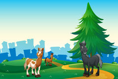 Three horses at the hilltop across the village Stock Photos