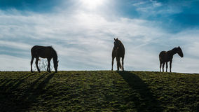 Free Three Horses In The Meadow Royalty Free Stock Photo - 86195095