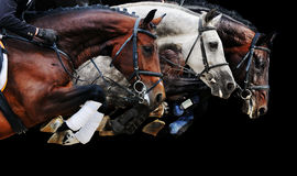 Three horses in jumping show, on black background