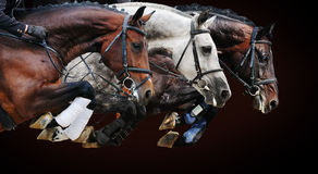 Three horses in jumping show, on brown background
