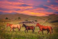 Three Horses on a meadow Stock Photo